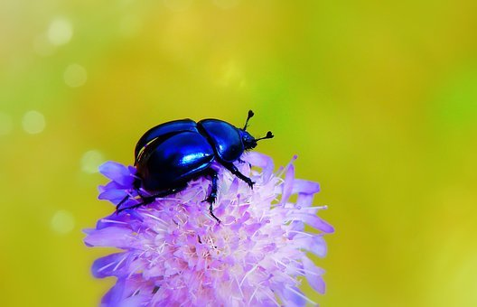 Forest Beetle, The Beetle, Wings, Flight, Start, Insect
