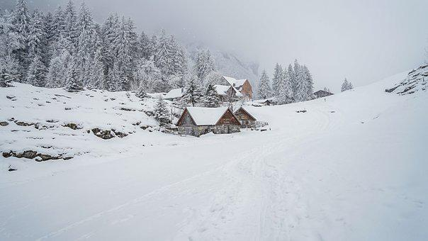Winter, Snow, Nature, Landscape, Cold, Wintry