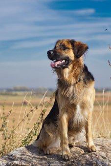 Dog, Landscape, Animal, Sky, Field, Pet, Hybrid