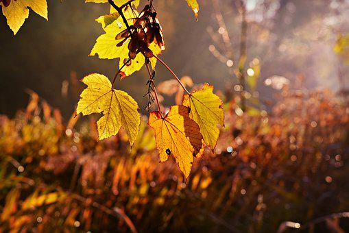 Leaf, Foliage, Branch, Tree, Autumn Color, Sunlight