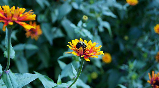 Flower, Leaf, The Garden, The Leaves, Blooming, Violet
