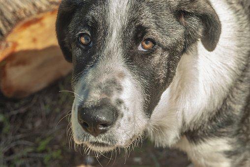 Dog, Sad, Animals, Pet, Eyes, Face, Loneliness