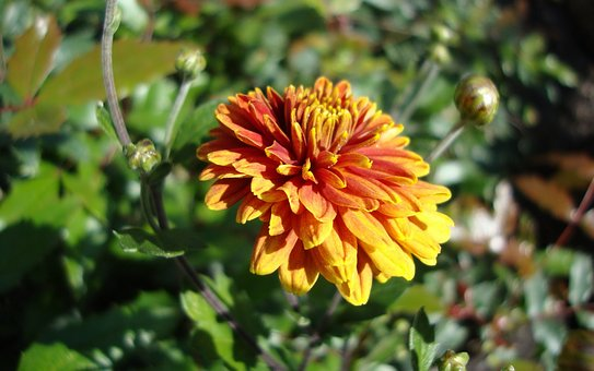 Flora, Fauna, Macro, Bokeh, Nature, Leaves, Flowers