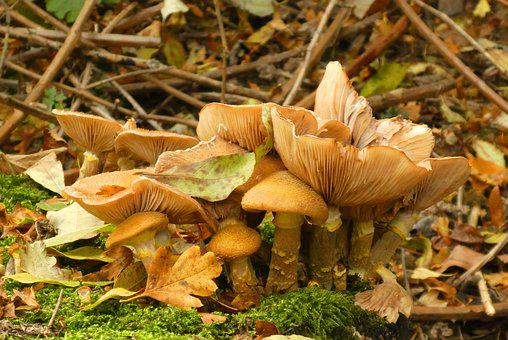 Mushrooms, Forest, Autumn, Nature, Moist, Forest Floor
