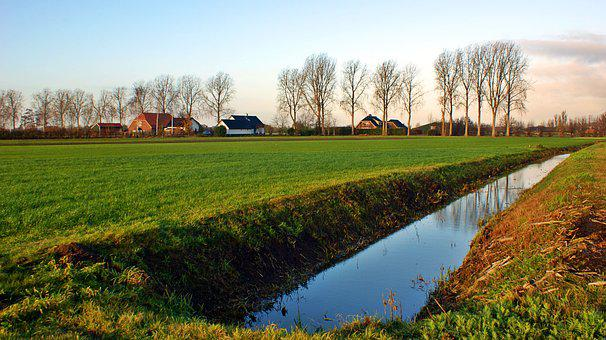 Morning, Pasture, Row, Trees, Water, Landscape, Nature
