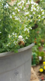 Spider, Bee, Nature, Strong, Weak, Food, Green, White