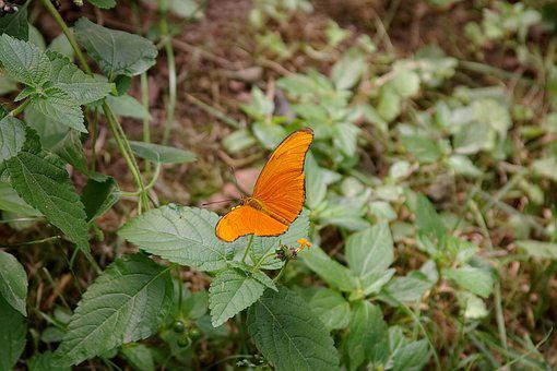 Orange, Butterfly, Zoo, York, Maine, Wildlife, Nature