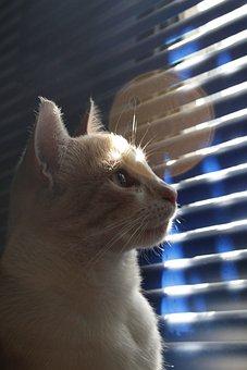 Cats, Pets, Feline