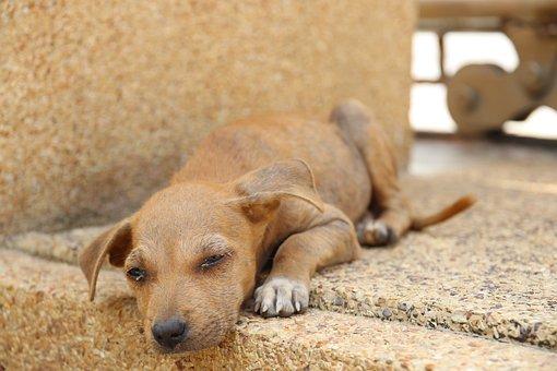 Thailand, Dog, Stray Dog, Animals, Pathetic, Puppy