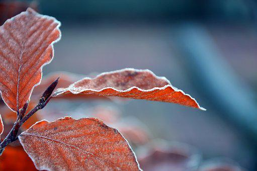 Leaves, Frozen, Frost, Ice, Ripe, Hoarfrost, Icy