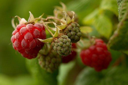 Raspberry, Raspberries, Fruit, Food, Fruits, Ripe, Red