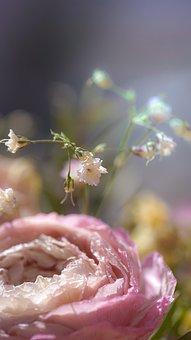 Flower, Romantic, Blossom, Bloom, Romance, Rose, Love