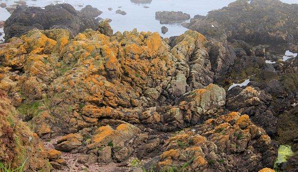 Seashore, Shore, Coast, Rocks, Seaweed, Harr, Sea Fog