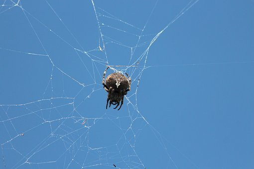 Spider, Spider Web, Arthropod, Animal, Blue Sky, Sky