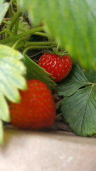 Red, Green, White, Strawberry, Brown, Soil