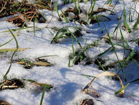 Grass, Snow, Winter, Nature, Cold, Ice, Spring, Meadow