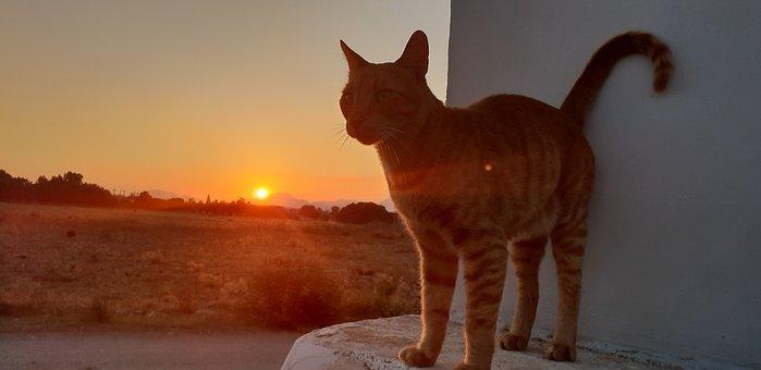 Abendstimmung, Cat, Summer