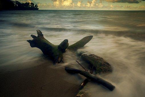 Wood, Long Exposure, Sea, Twilight, Guadeloupe