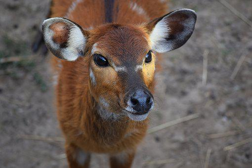 Deer, Doe, Ungulates, Animal, Zoo, Wild World, Mammal