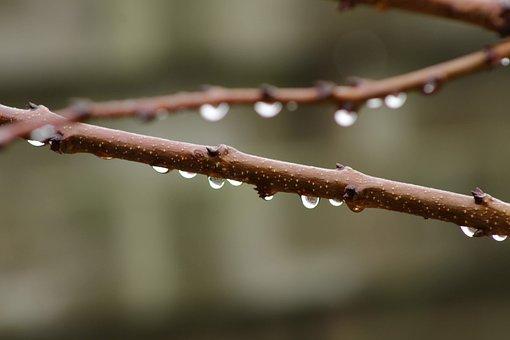 Branch, Raindrop, Drop Of Water, Rain, Water, Drip, Wet