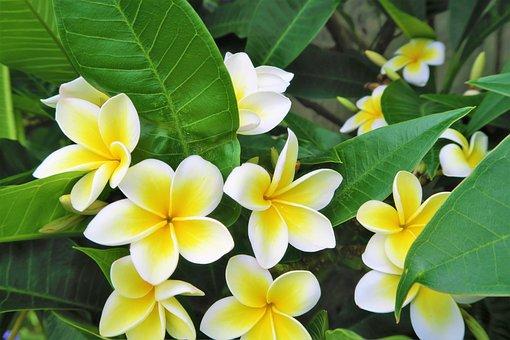 Tropical, Flower, Nature, Plant, Garden, White