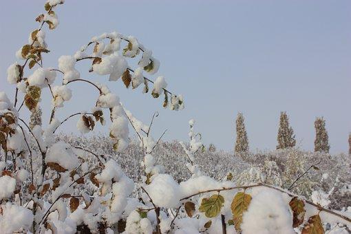 Leaves, Snowy, Winter, Clear Sky, Sky Blue, Seasons