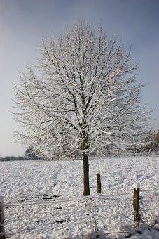 Winter Picture, Winter Tree, Snow, Wintry, Winter Dream