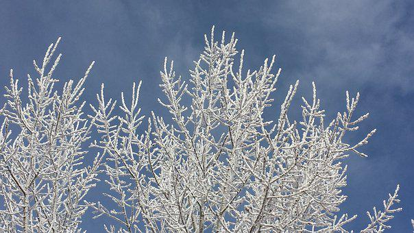 Frost, Branches, Snow, Tree, Frozen, Wintry, Freeze