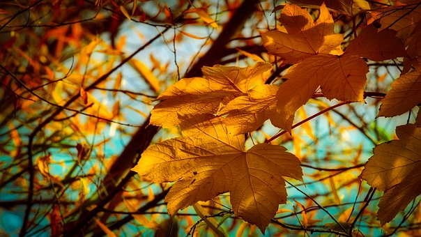 Autumn, Leaves, Yellow, Bright, Autumn Mood, Emerge