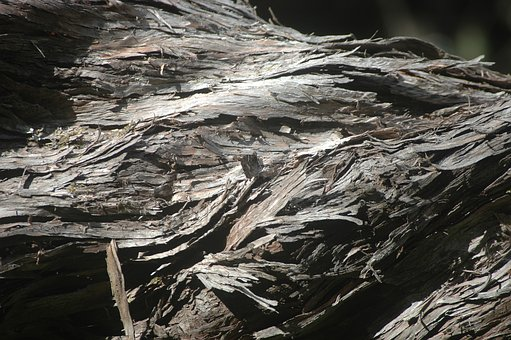 Bark, Tree, Nature, Wood, Old, Plant, Wild, Structure