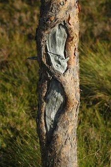 Tribe, Tree, Bark, Nature, Wood, Old, Log, Plant