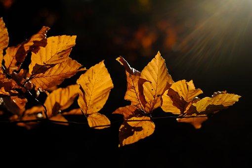 Leaves, Hornbeam, Branch, Fall Color, Mood, Autumn Mood