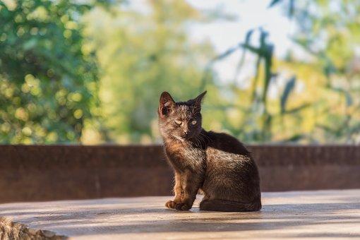 Cat, Kitten, Cute, Black, Young, Portrait, Table