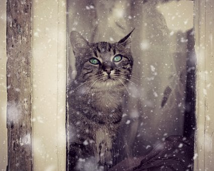 Cat, Window, Snow, Snowflakes, About, Winter, Animals