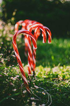 Candy Cane, Christmas, Garden, Decoration, Outside