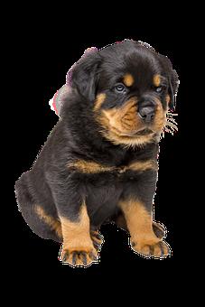Dog, Isolated, Pet, Animal, Nature, Purebred Dog