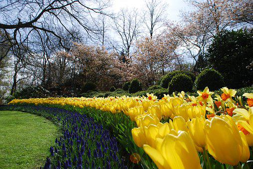 Holland, Dutch Park, Dutch Bulbs, Spring, Keukenhof