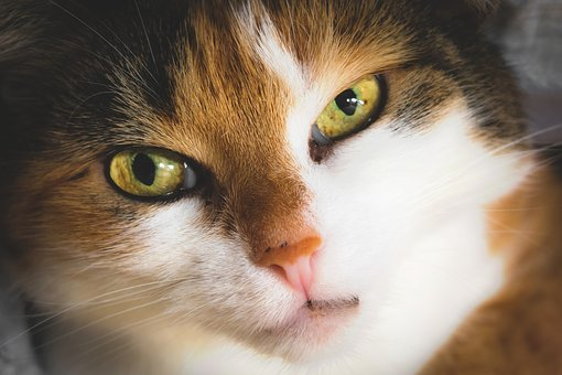 Cat, Cat's Eyes, Contact, Relationship, View, Face