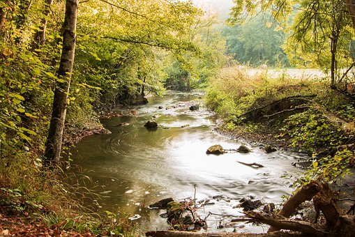 Landscape, Forest, River, Water, Torrent, Fall, Wood