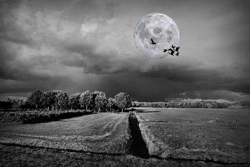 Landscape, Moon, Bird, Polder, Dutch, Fields, Ditch