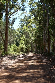 West Australia, Gravel Road, Forest Path, Forest Avenue