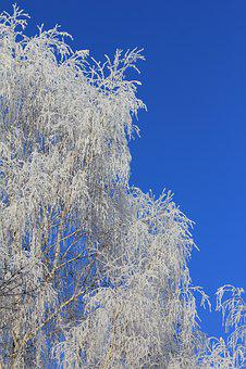 Tree, Frozen, Fancy Birch, Nature Background