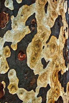 Bark, Pattern, Trunk, Surface, Grain, Woods, Material