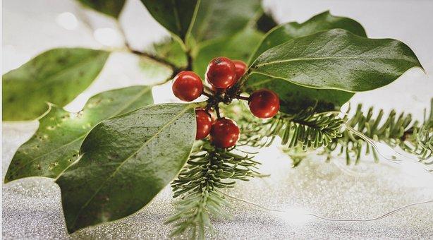 Holly, Christdorn, Prickly, Winter Berries, Green