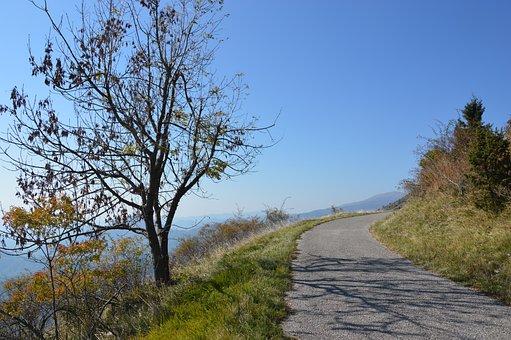 Friuli, Mountain, Path, Forest, Nature, Hiking