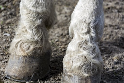 Horse Feet, Nature, Animal World, Close Up