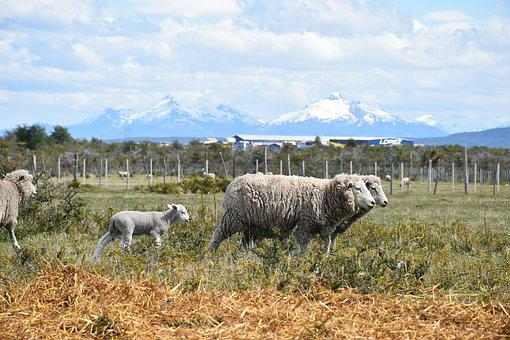 Patagonia, Mountains, Landscape, Nature, Meadow, Wool