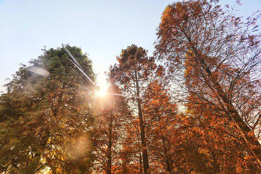 Tree, Forest, Sunny, Landscape, Green, Leaves, Light