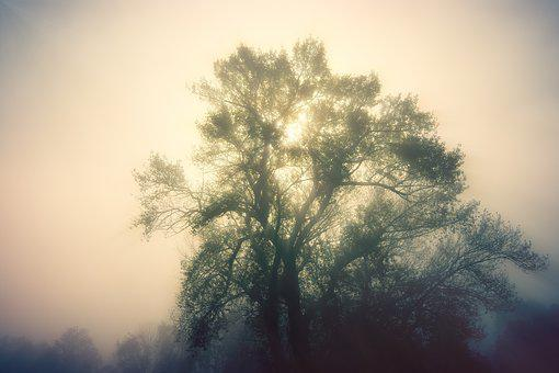 Dawn, Light, Trees, Fog, Ray Of Hope, Landscape, Nature