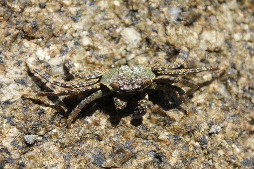 Closeup, Animal, Tropical, Natural, Crab, Wild, Sea